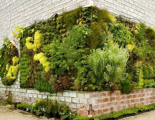 Ідеї вертикального озеленення для міста
