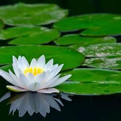 Водні рослини