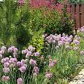 2015 - Сад с цветниками - 84