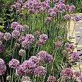 2015 - Сад с цветниками - 6