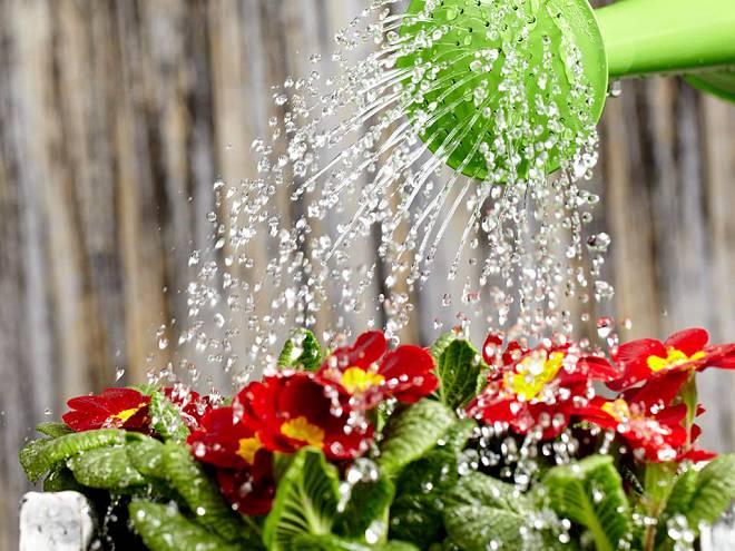 Як правильно поливати квітник?