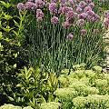 2015 - Сад с цветниками - 10