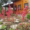 2015 - Сад с цветниками - 38