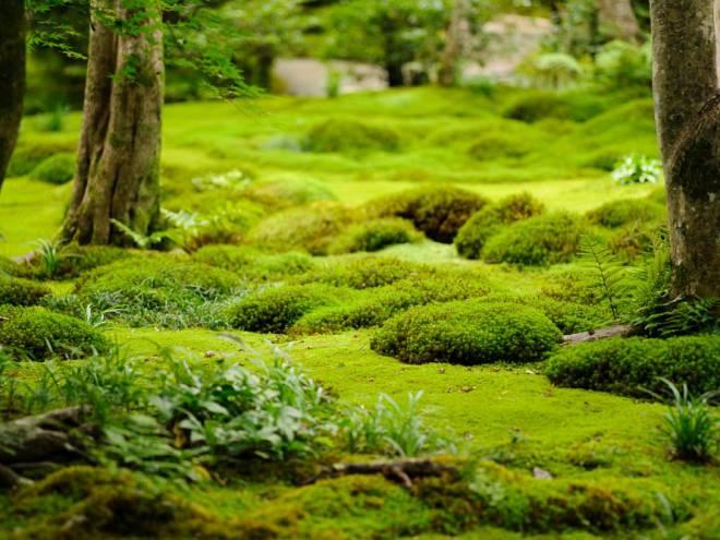 Альтернатива газону: садовий моx