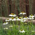 2015 - Сад с цветниками - 60