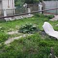 2013 - Малый сад - 62