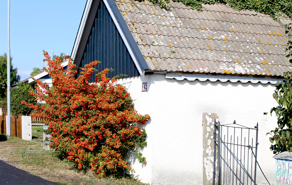 Вічнозелені рослини для саду: опис та фото-ідеї