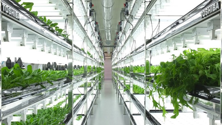 Гідропонна система для дому і саду