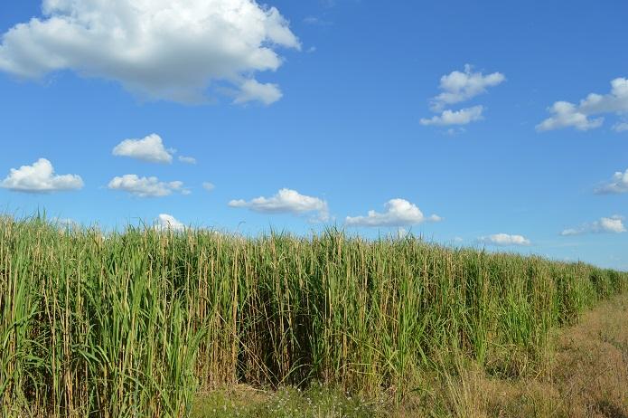 biotrendy-v-agrosektore-09.jpg