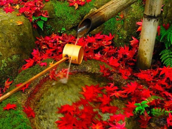 spring-bamboo-in-garden-04.jpg