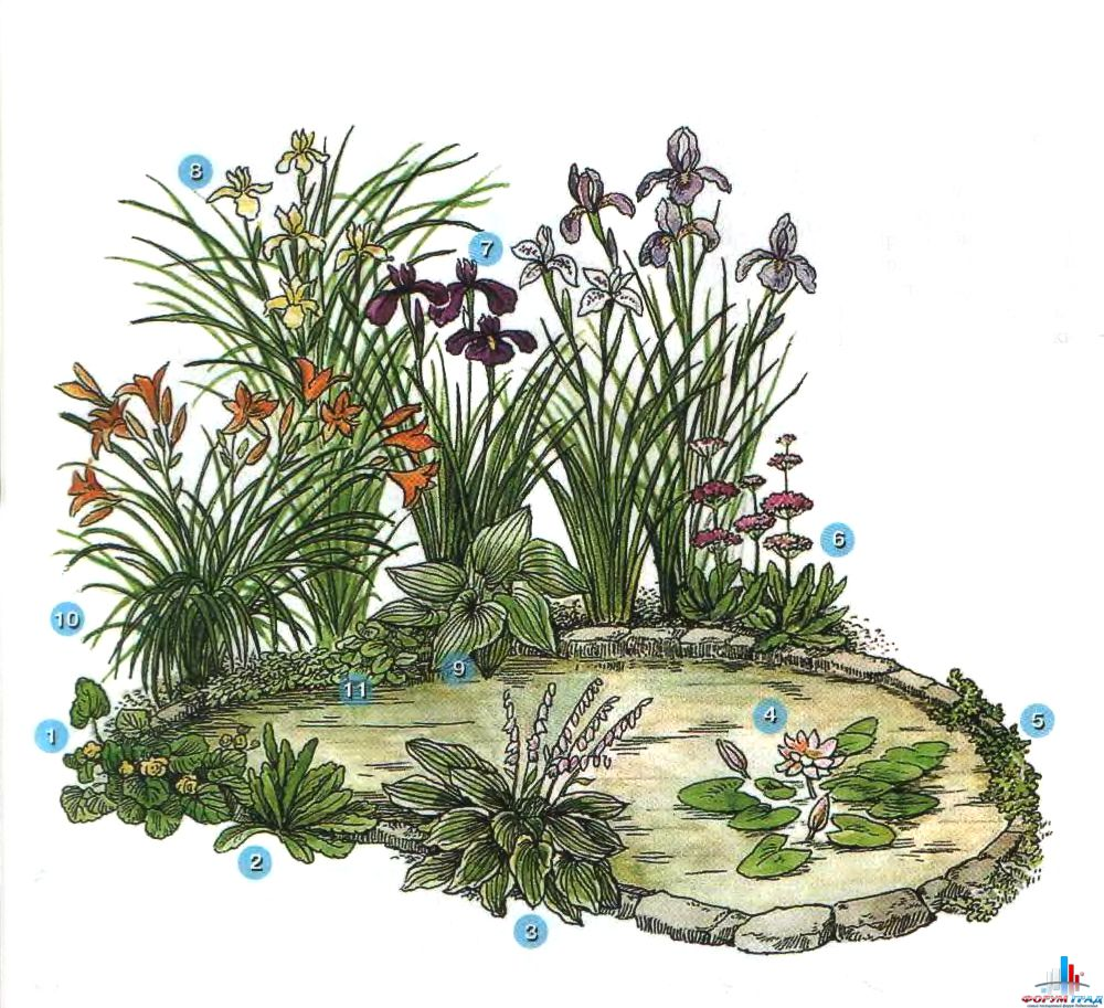 decorating-pond-plants-01.jpg