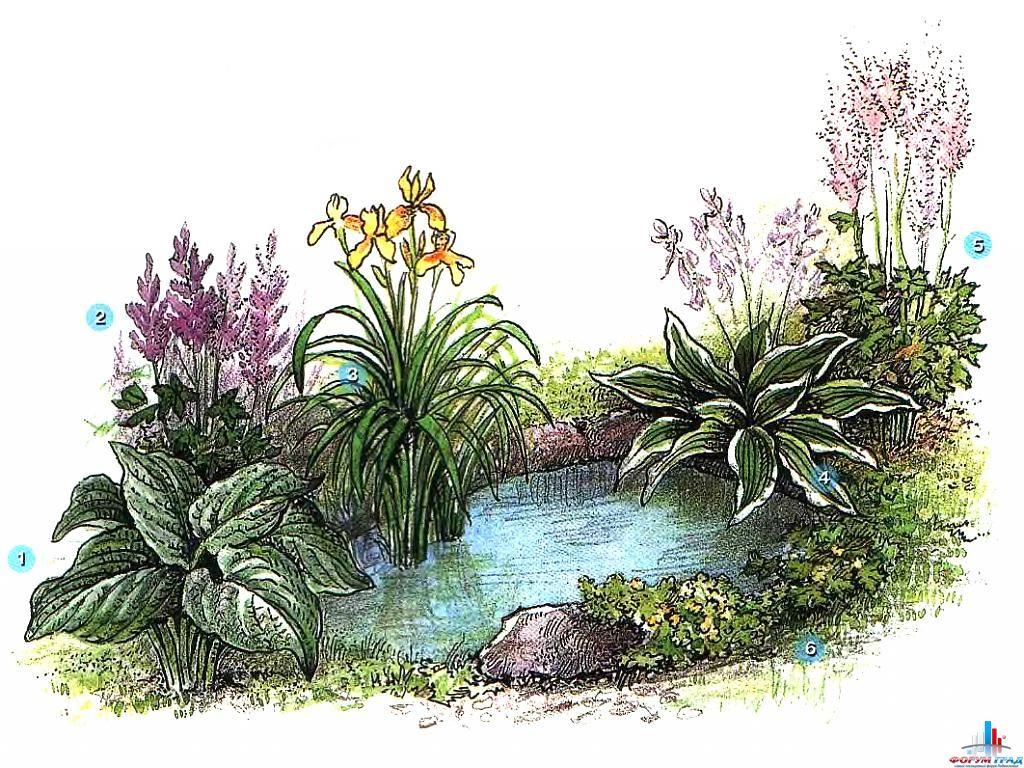 decorating-pond-plants-02.jpg