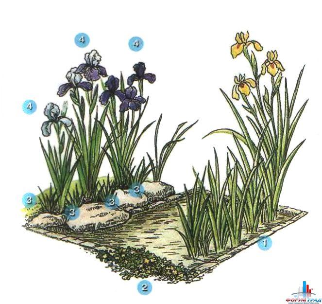 decorating-pond-plants-03.jpg