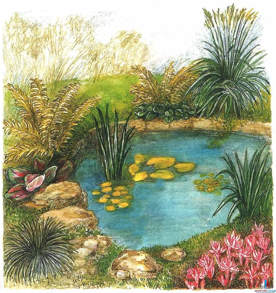 decorating-pond-plants-05.jpg