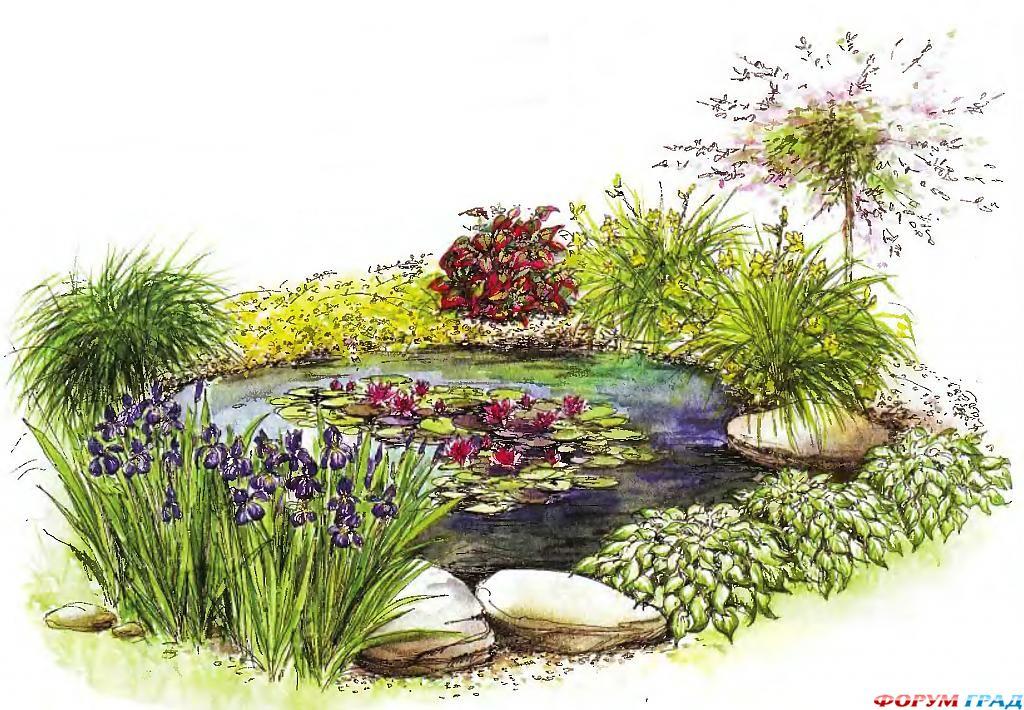 decorating-pond-plants-16.jpg