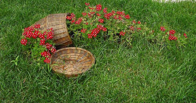 stream-flower-bed-01.jpg