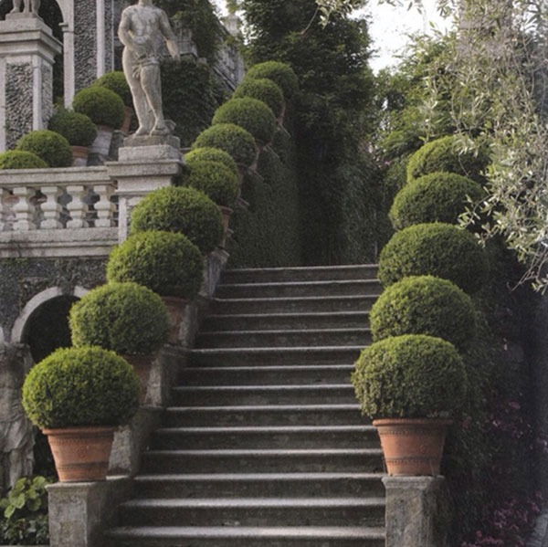 boxwood-gardens-03.jpg