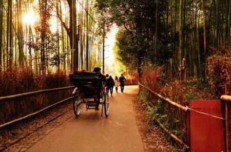 bambookovuj_lis_1.jpg
