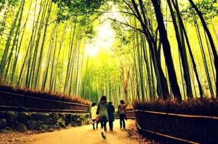 bambookovuj_lis_4.jpg