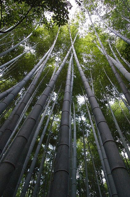 bambookovuj_lis_5.jpg