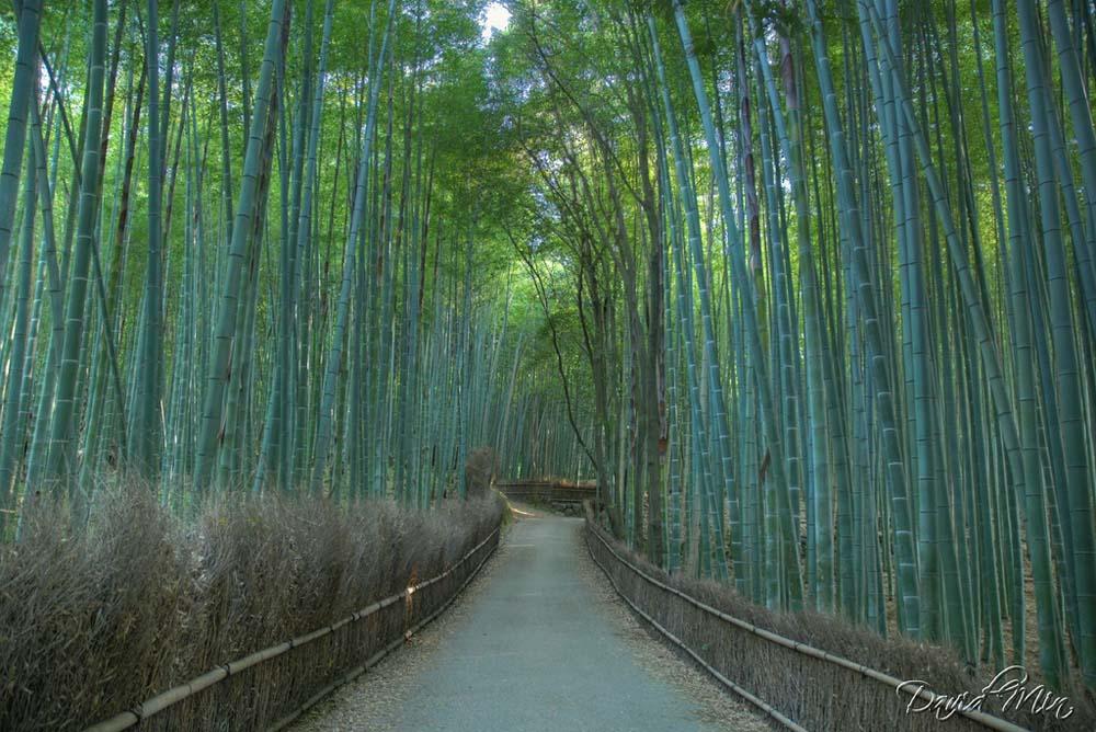 bambukovuj_lis-korudor_12.jpg