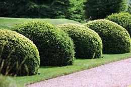 Топіарні сади