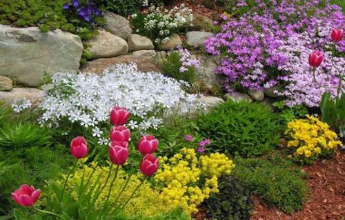 Квіти та інші рослини для альпійської гірки, види рослин та їх розташування