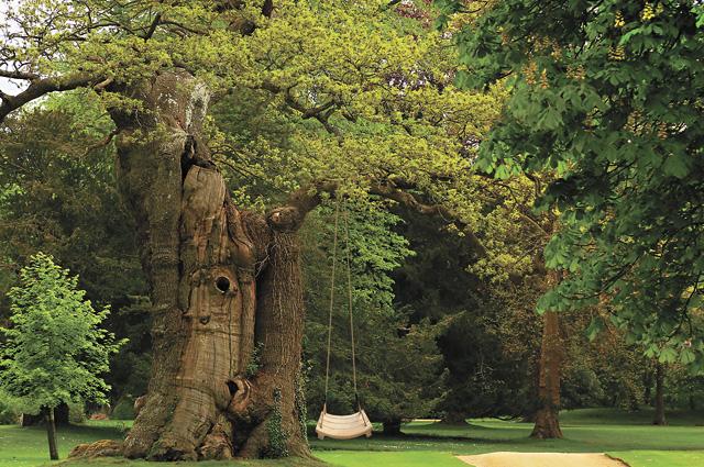 Родинне дерево. Як відродити традицію