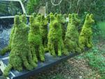 Топіарне мистецтво - фігурна стрижка рослин