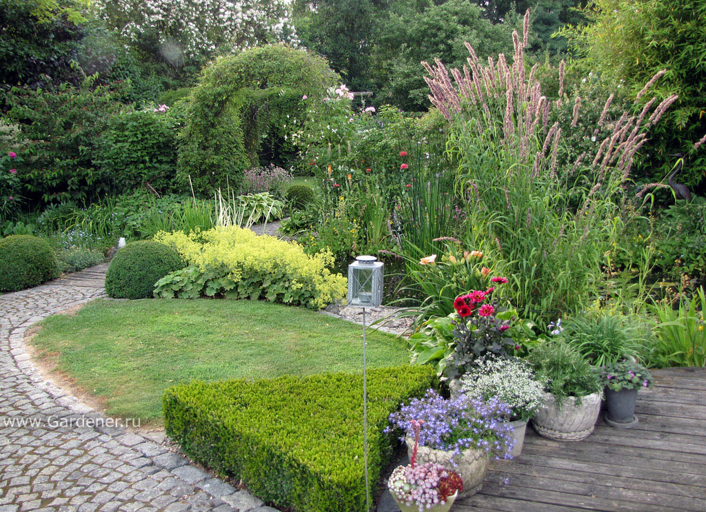 манжнтка в садовом дизайне