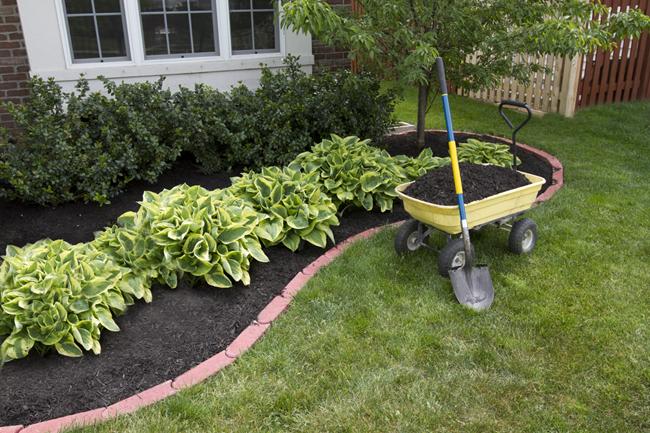 Як підготувати сад до зими?