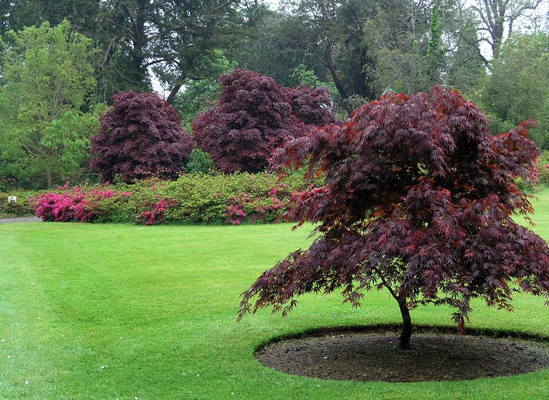 mount_congreve_gardens_12.jpg