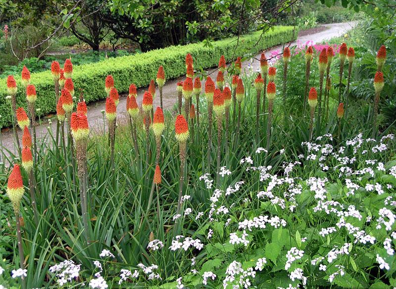 mount_congreve_gardens_7.jpg