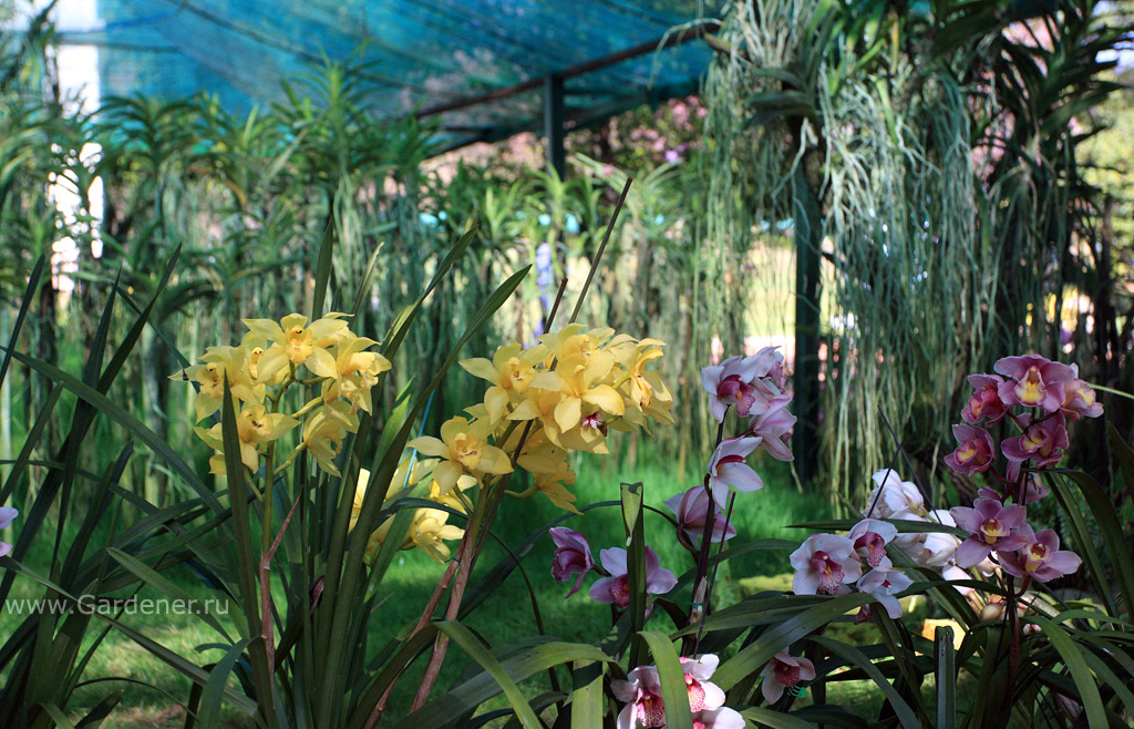 nacionalnii_botanicheskii_sad_kendoydji_40.jpg