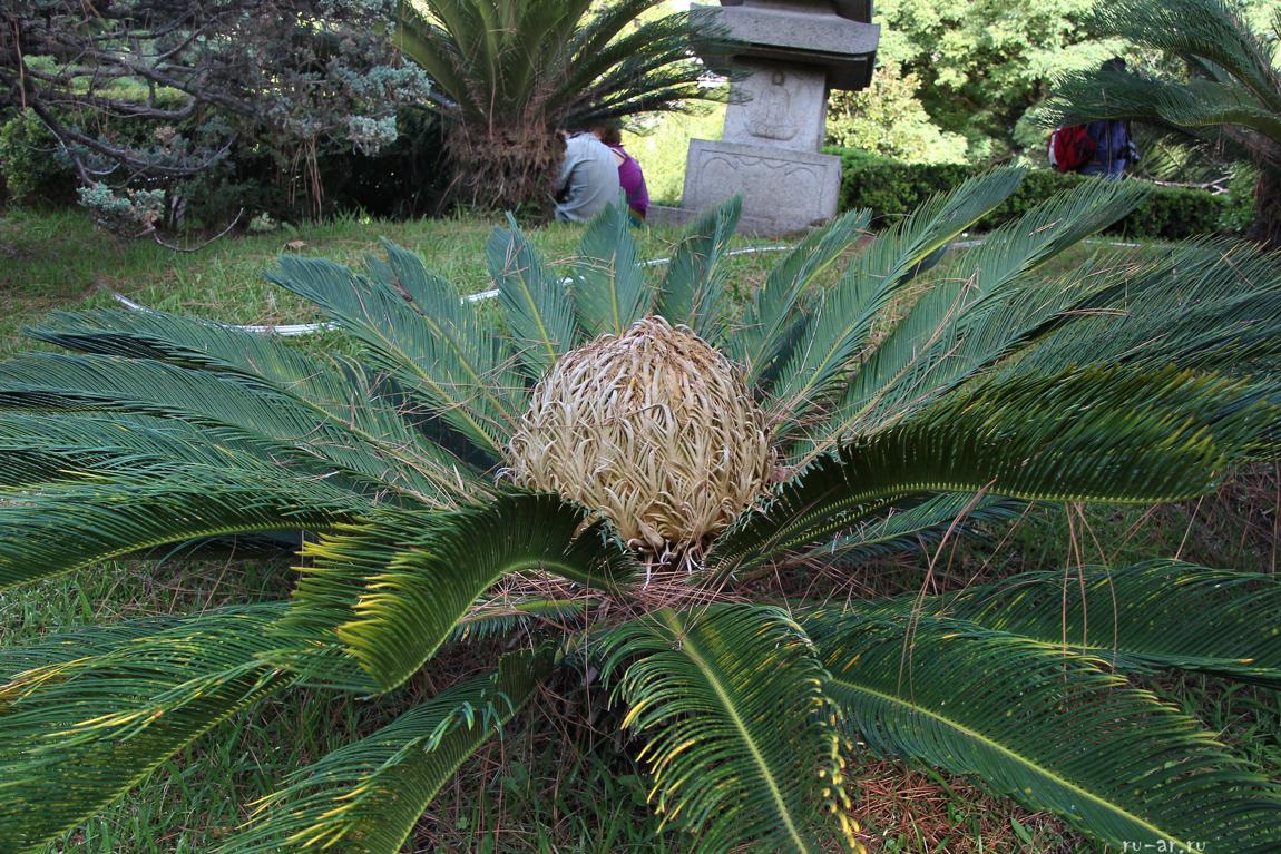 jardin-_bojsoj_japonskij_sad_v_argentine_1.jpg