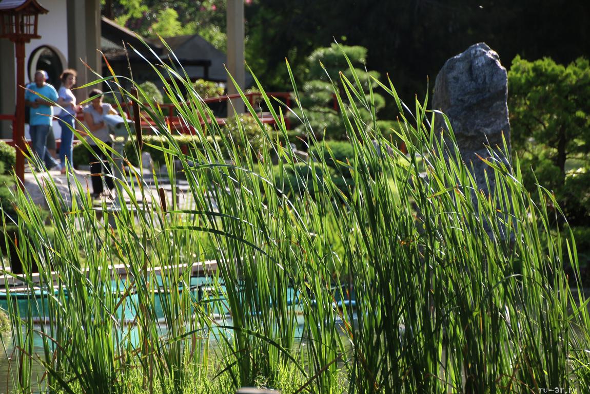 jardin-_bojsoj_japonskij_sad_v_argentine_9.jpg