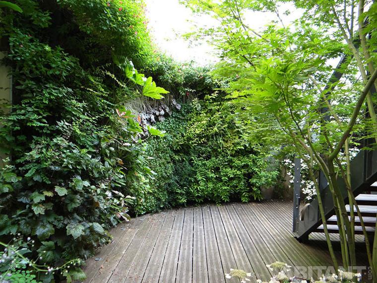 Вертикальний сад. Практикум