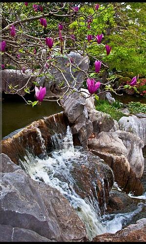 sydney_chinese_garden_30.jpg