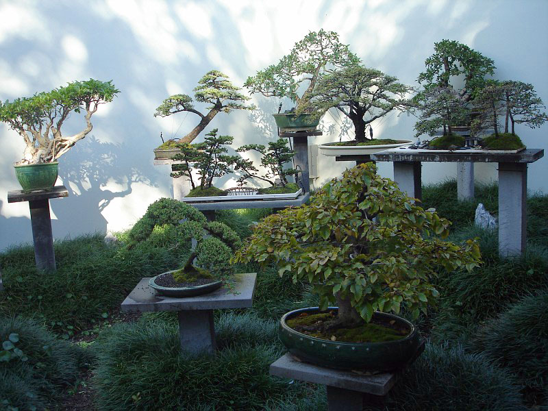 chinese_garden_of_friendship_1.jpg