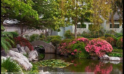 sydney_chinese_garden_27.jpg