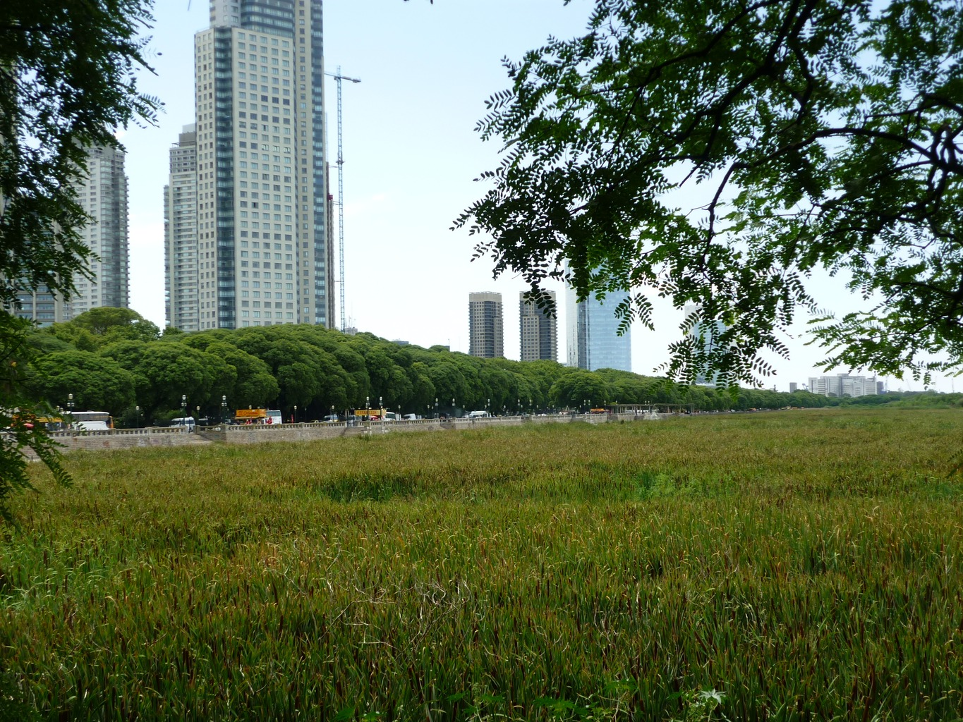 _ecological_reserve-buenos_aires_1.jpg