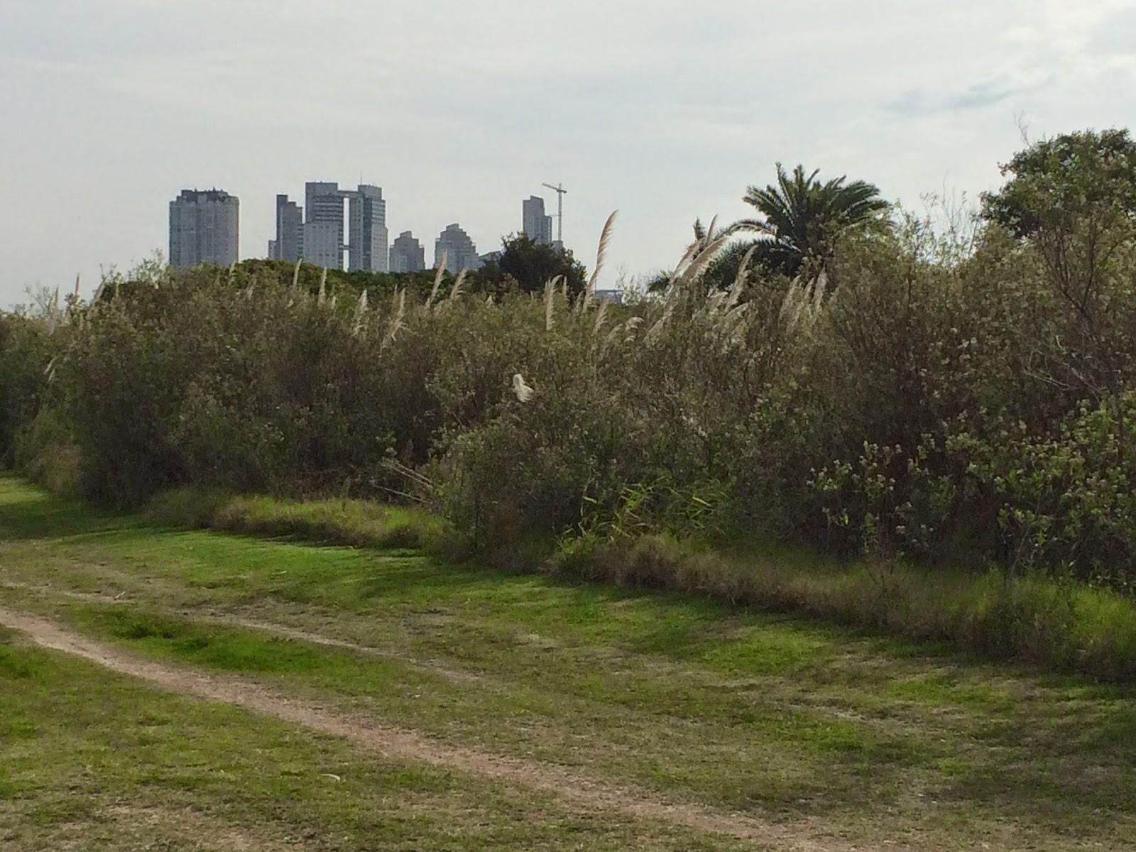 park_reserva_ecologica_argentina_9.jpg