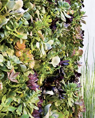 Вертикальні сади. Квіткова мозаїка американських дизайнерів