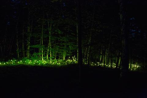foresta_lumina_2.jpg