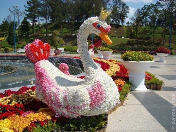 dalat_flower_gardens_8.jpg