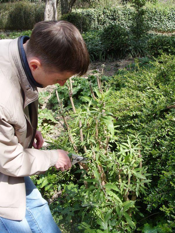Обрізка декоративних деревних рослин: строки, види, правила