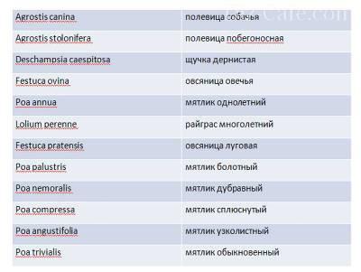 tablitsa-rastenij_dla_gazona.jpg