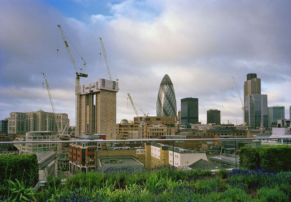 polevie_cveti_na_terrasnom_dome_v_centre_londona.jpg