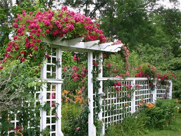 Розы своими руками для сада