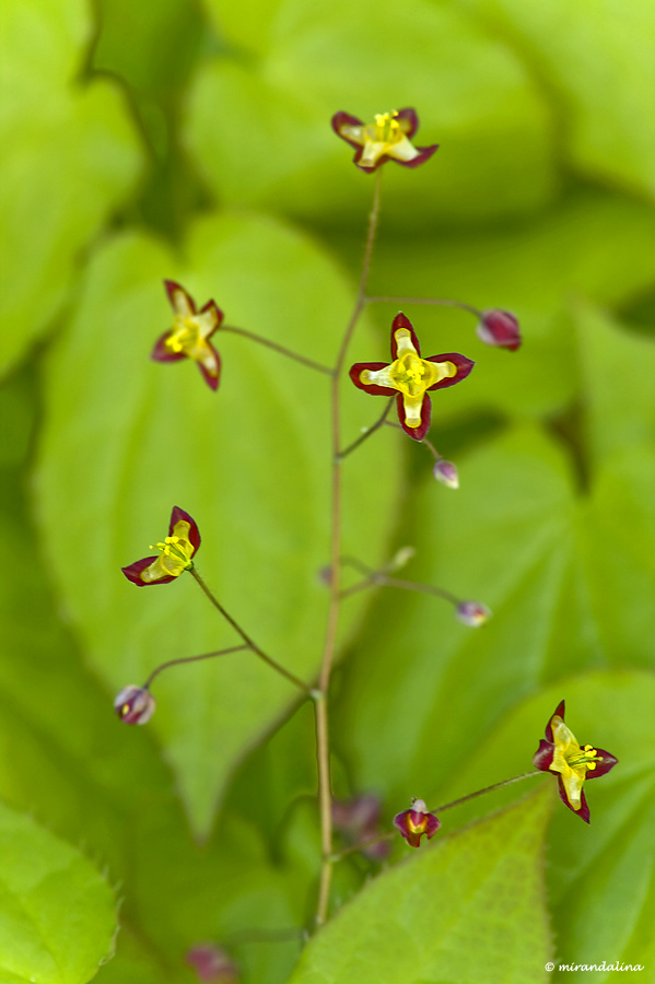 botanic_garden_sad_kopengagen_27.jpg